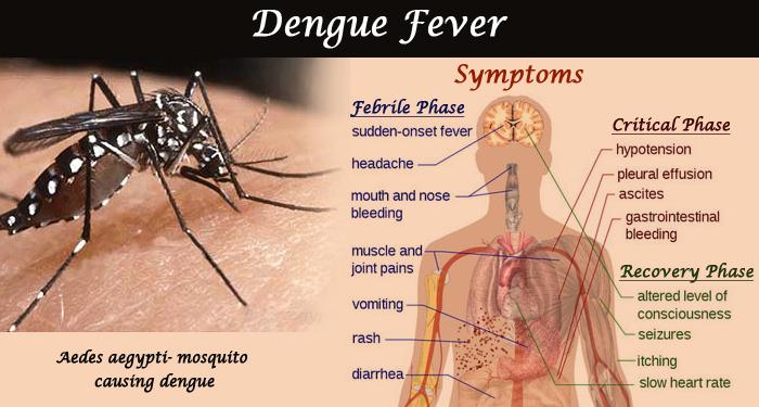 Dengue Fever and The Tropics