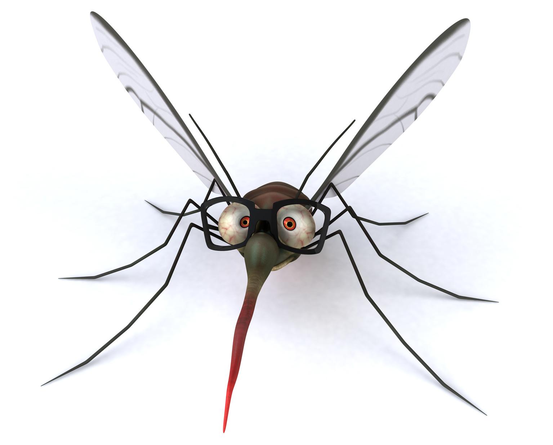 Malaria : Don't get bitten!
